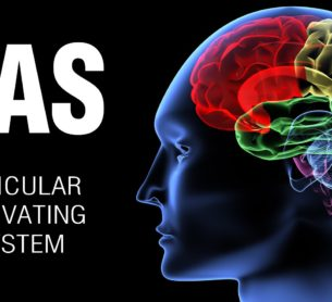 The Reticular Activating System and How It Influences Your Behavior and Performance